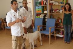 Sessão de Zooterapia